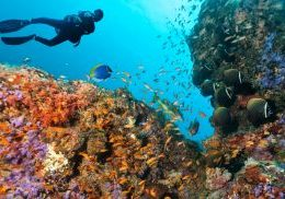 Scuba diver explore beautiful coral reef.